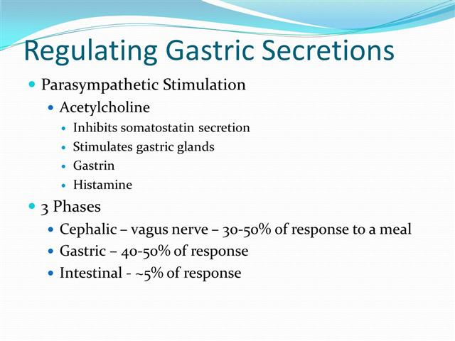 what are the three phases of gastric secretion