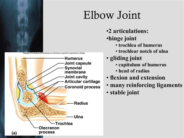 Synovial Joints And Arthritis
